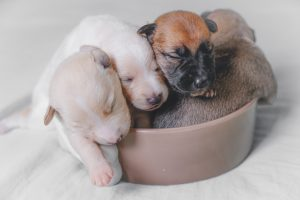 Puppies On Bed
